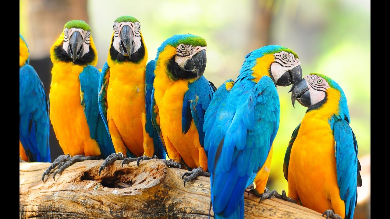 Macaw Parrot Pet Birds - Macaw Food