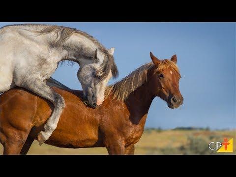 Clique e veja o vídeo Curso Reprodução de Cavalos - Gestação - Cursos CPT