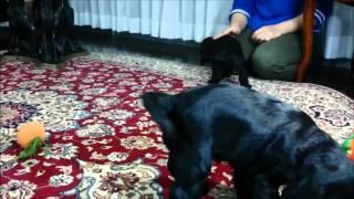 【イングリッシュコッカースパニエル.jp】http://www.ecocker.jp/ 【犬...