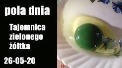 Pola Dnia 26.05.20: Tajemnica zielonego żółtka