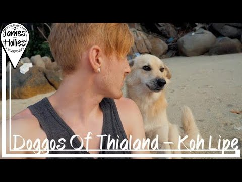 THE DOGS OF THAILAND! Koh Lipe - Travel Thailand Vlog