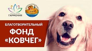Благотворительный фонд помощи животным «Ковчег»