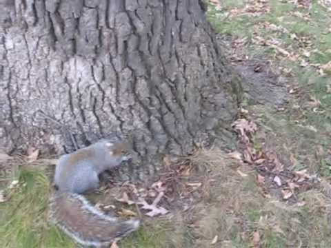Drunk Squirrel