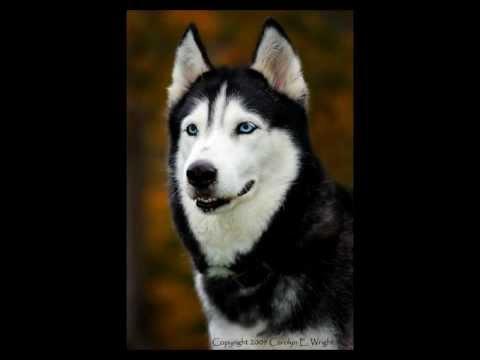 En İyi 10 Köpek