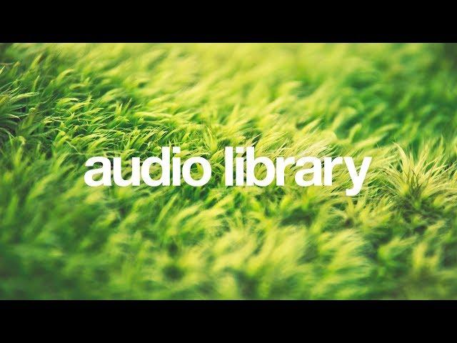 Birds — Scandinavianz  [Vlog No Copyright Music]
