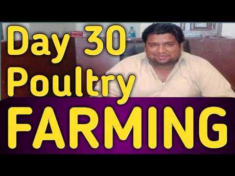 Poultry Farming Practical Day-30