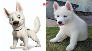 Dogs Cartoon Character In Real Life | Superheroes In Real Life As Dogs