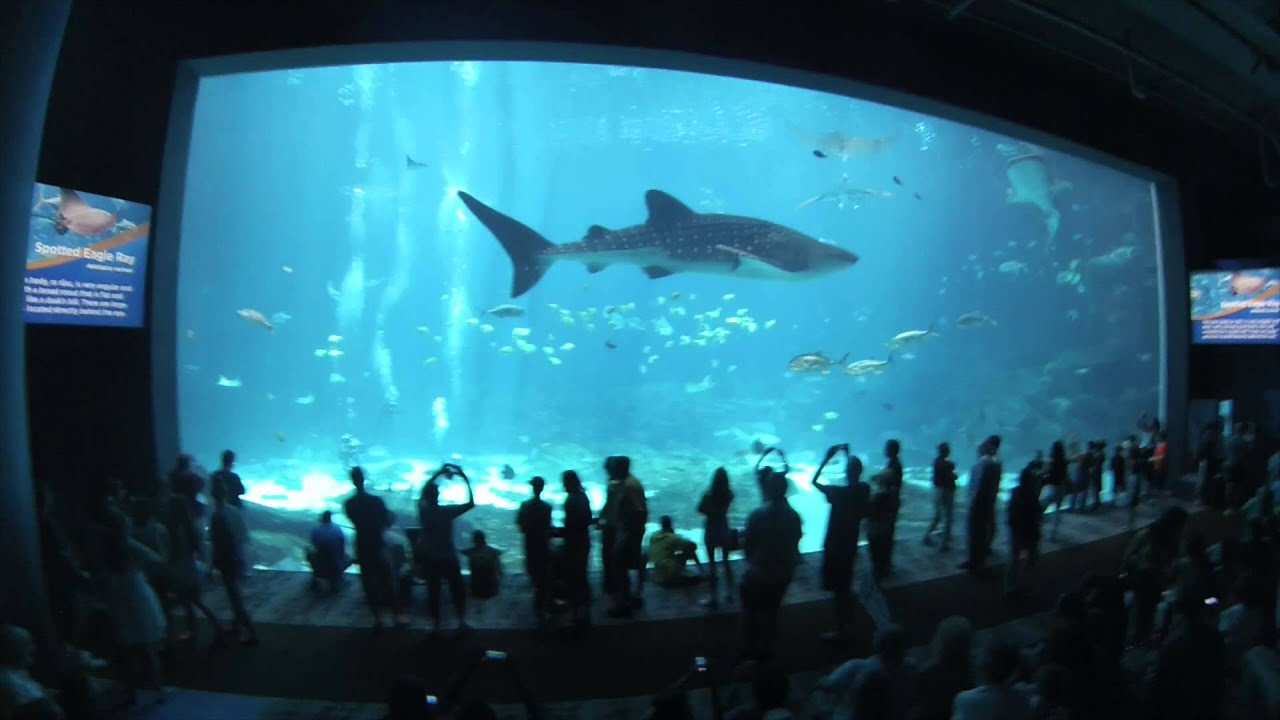Connu Georgia Aquarium Virtual Tour 1080p HD - YouTube SS35