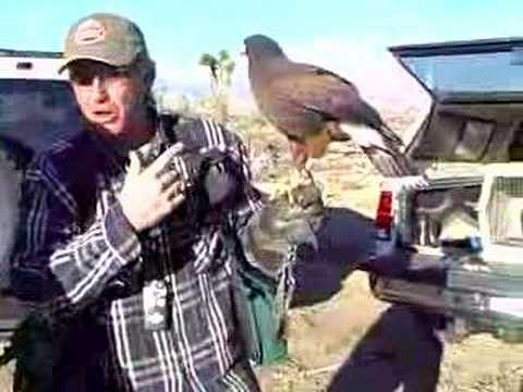 Falconry Educational Tours - Elite Land Tours - Palm Springs