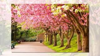 Download lagu Beautiful Nature Wallpapers, Beautiful Wallpapers, Wallpaper images, Wallpaper Hd Nature