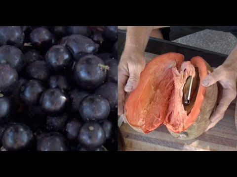 I Eat These 4 Fruits to BOOST My HEALTH & LONGEVITY