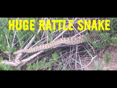 RATTLESNAKE FOUND DURING HIKE IN COLORADO SPRINGS