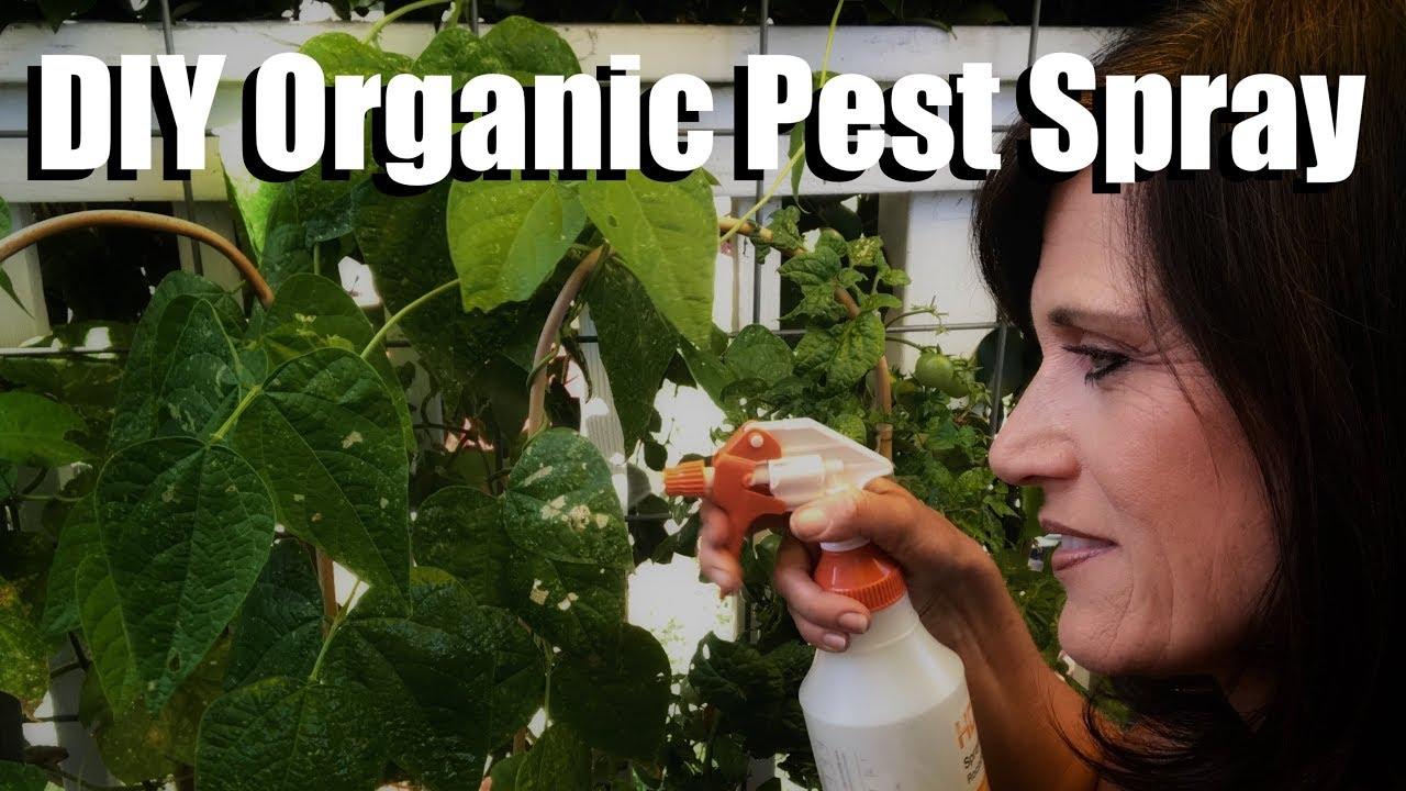 Diy Organic Pesticide Spray With Neem Oil Peppermint Oil Worm