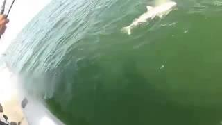 Рыбалка!ловля акулы,опасно(челы ловят акулу., 2014-08-24T21:48:31.000Z)