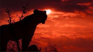 Tanzania - Beautiful Creatures
