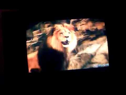 Best scene of zookeeper