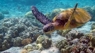 Черепахи смешные и прикольные