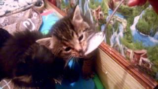 Маленькие котята едят мороженое.  Красивые котята. Котики!