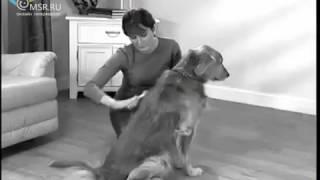 Щетка пылесос Auto Pet Shaver, для удаления шерсти животных