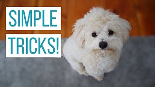 HOW WE TAUGHT OUR MALTIPOO BASIC TRICKS | How to Train Your Dog Sit, Down, Up, Stand, & Roll Over!