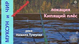 Русская рыбалка 4 - река Нижняя Тунгуска - Муксун и чир трофейный