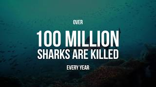 Stop the Shark Killers Now: Extinction is Forever