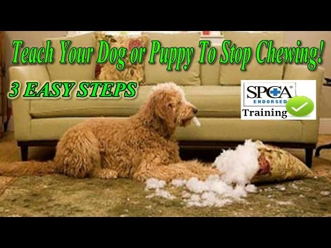 ►-how-to-teach-your-puppy-or-dog-to-stop-chewing-♥-3-easy-steps!-♥-watch-here-:)))