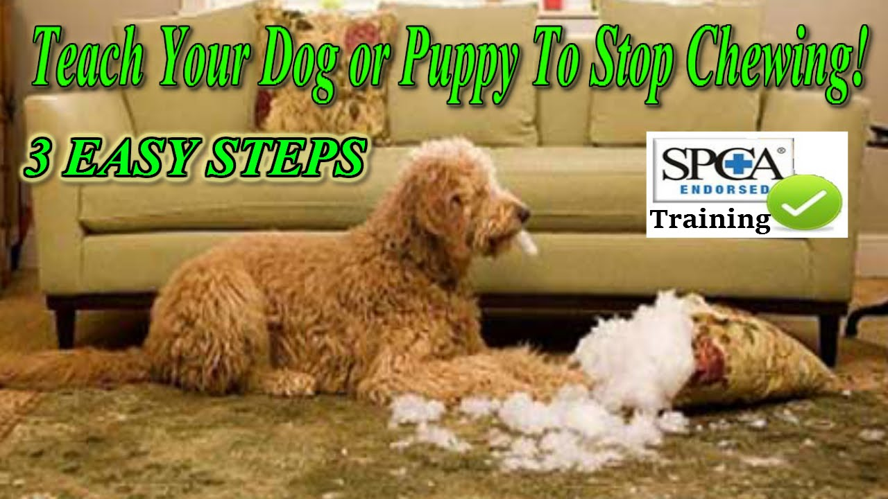 ▻ how to teach your puppy or dog to stop chewing ♥ 3 easy steps