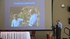 SY01009_Franklinia alatamha, An American Medicinal Tea Plant