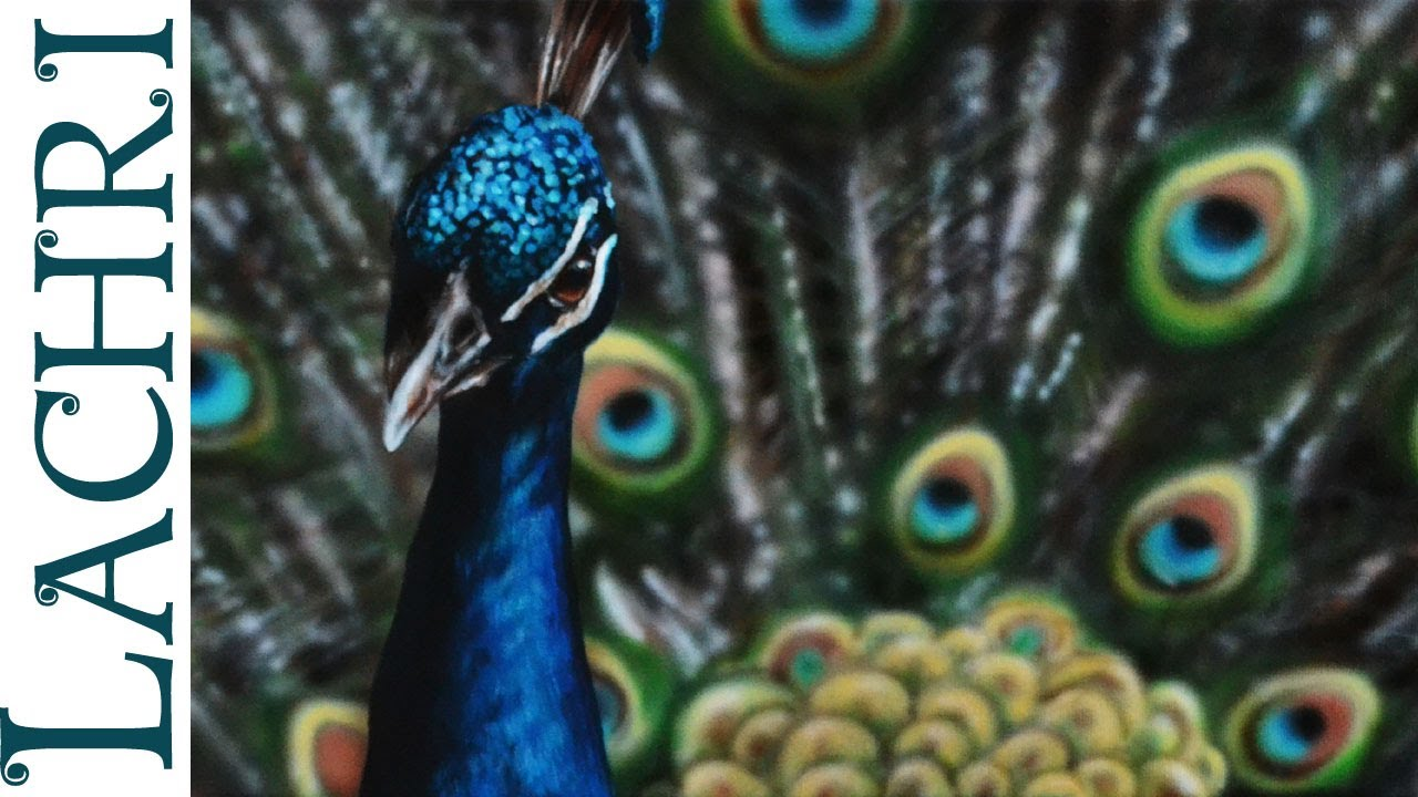 speed painting a peacock in acrylic and airbrushing time