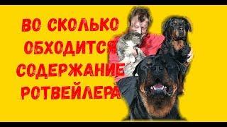 ВО СКОЛЬКО ОБХОДИТСЯ РОТВЕЙЛЕР.Дрессировка собаки