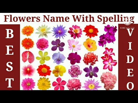Learn Flowers Name With Picture in English for kids// Name of Flowers//Nursery Lkg Ukg