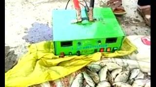 рыбалка электроудочкой обзор улова карп, толстолобик, змейголова