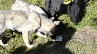 собака водка жрат.mpg