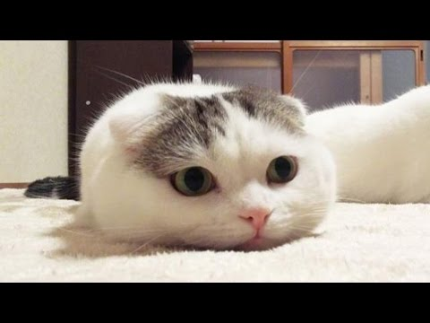 New Cute Kittens Meowing | Aaron's Animals Cats Meowing Compilation 2017 ( Part 2 )