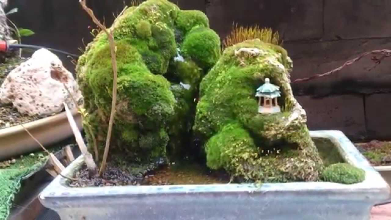 Un estanque en una maceta de bonsai youtube for Mini estanque