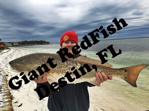 Giant Redfish Destin Florida Bank Fishing VLOG#15