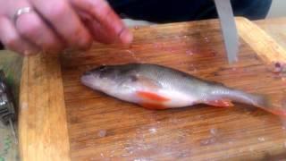 как сделать филе из речной рыбы