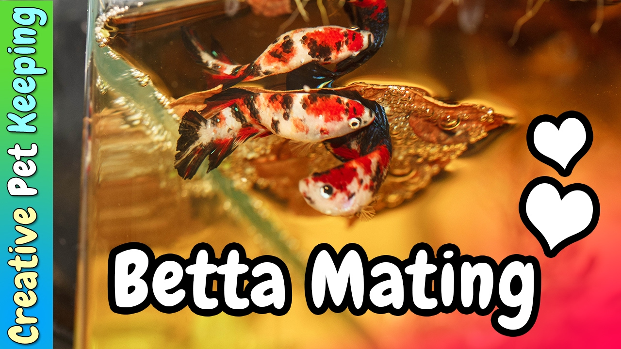 13 Best Tank Mates for Betta Fish | PetHelpful
