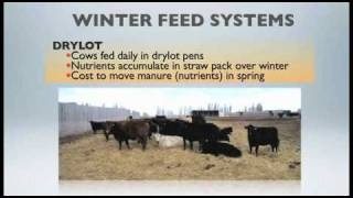 WBDC - Winter Feeding Beef Cows on Pasture.mov