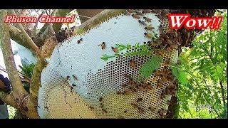 เต็มๆตามจนเจอวันที่2 ใหญ่มาก Ep.3 คลิปเต็มตัดผึ้งสุดโหด
