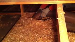 Attic Pros Calgary Removing Wood chips