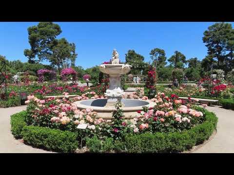 Paraíso de rosas en el centro de Madrid. ¡Esta #rosaleda debería estar en los #GuinnessWorldRecords!