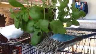 Killing the house plants