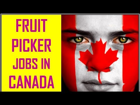 How To Get Fruit Picker Jobs In Canada