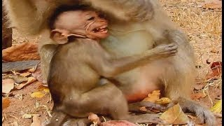 Lull Me With milk Mom ! Poor baby Eleno hungry verry much| Elsa Release milk not give baby.