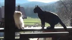 Bela mačka črn mačkon