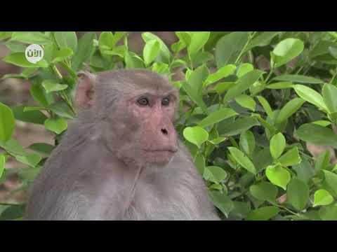 الحيوانات تحتل شوارع الهند