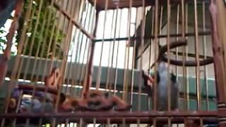 Repeat youtube video นกโอเว่น กลุ่มนรานำชัย.3GP