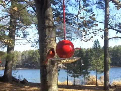 Birdpods- Birdhouse or bird feeder  2 in 1
